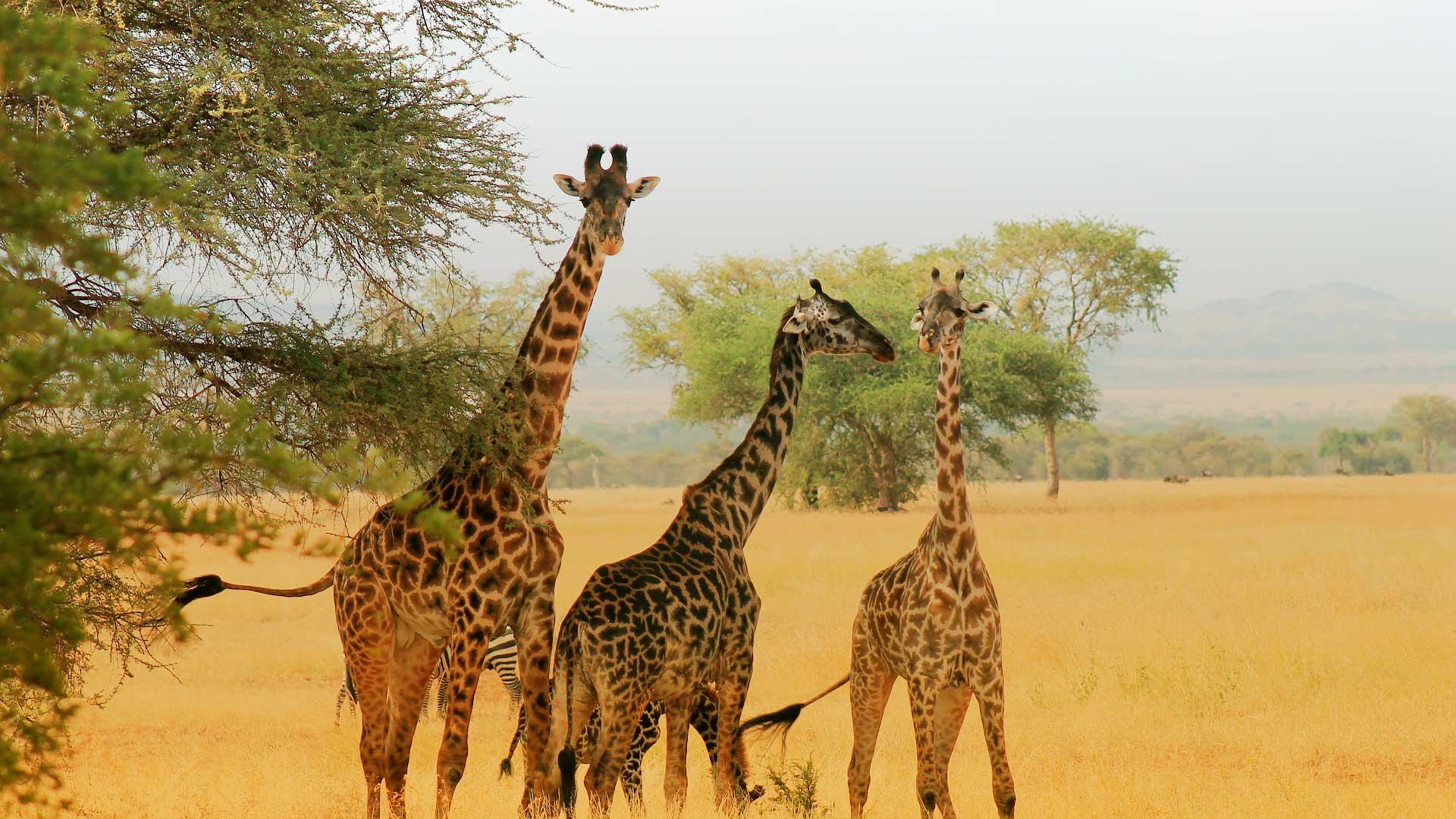 Safari Kenia & Tanzania